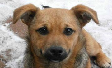 Cały czas dzwonią do nas ludzie, którzy poszukują swoich psów spłoszonych fajerwerkami - mówi Zofia Białoszewska dyrektor ... - pies